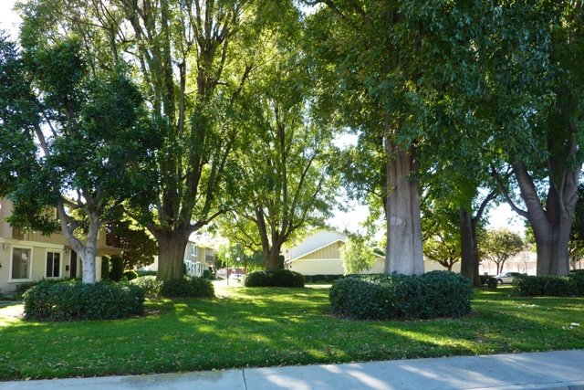Palm Gardens In Placentia Is A Beautiful Community In, Orange County,  California